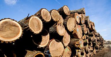 木の種類と特徴
