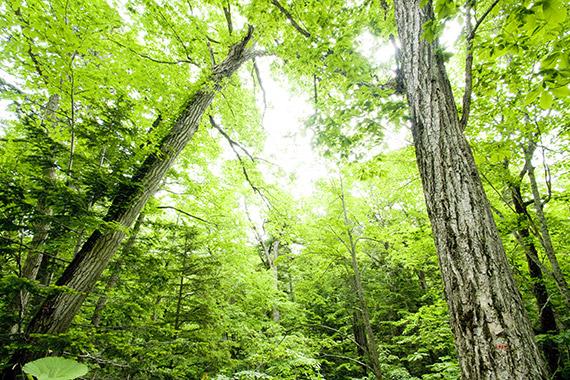きときと、素材と森のこと。
